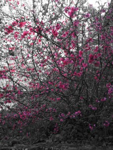 fleurs-arbre