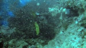 maldives-fujifilm-065-02
