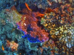 maldives-fujifilm-081-02