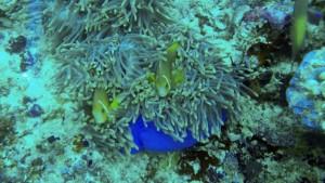 maldives-fujifilm-082-02