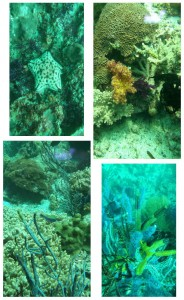 Oman-Musadan-plongee