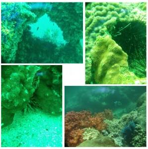 Oman-Musadan-plongee-3
