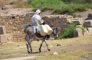 bulla-regia-bedouin