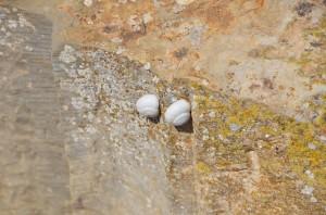 bulla-regia-escargots