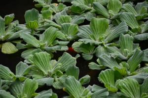 belfast-botanic-garden-1