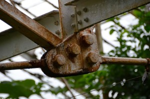 belfast-botanic-garden-2
