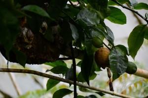 belfast-botanic-garden-3