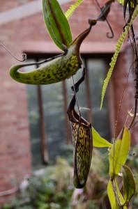 belfast-botanic-garden-5