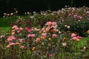 belfast-botanic-garden-7