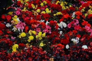 belfast-botanic-garden-9