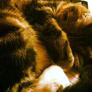glande-chat