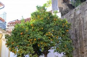 lisbonne-oranger