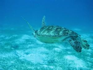 tortue-philippines