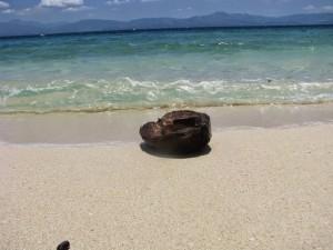 Philippines-coco