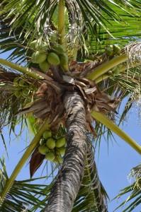 coco-philippines