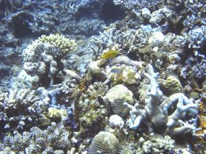 plateau corallien Philippines