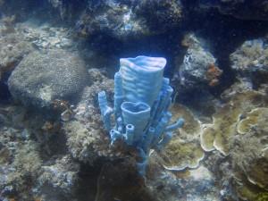 Corail Philippines