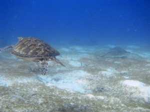 tortues philippines