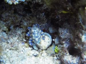 Ceci est bien un poulpe et je suis super fière de l'avoir trouvé