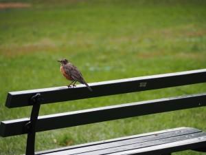 central-park-oiseau