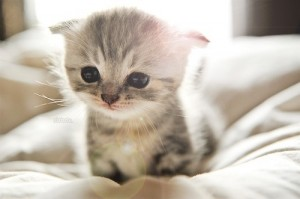 chaton-mignon