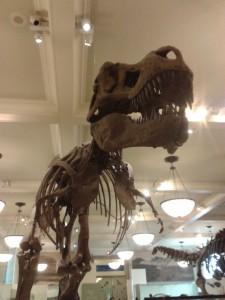 tirannosaure_rex_new_york