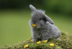 lapin-tout-mignon-lapinou