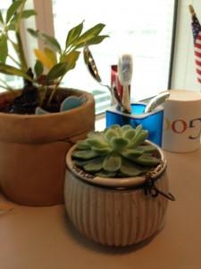 Bon, ce sont mes plantes du bureau et la petite, c'est mon cadeau de Noël mais j'ai des plantes quand même