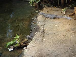 aligator-biodome