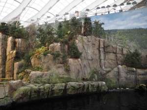 biodome-montreal-oiseaux