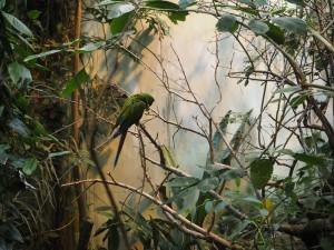 biodome-perroquet