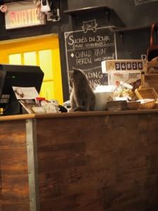 chat-l-heureux-montreal_1