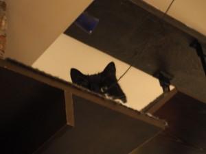 chat-l-heureux-montreal_2