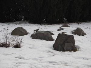 ecureuil-neige