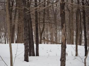 mont-royal-ecureuil-montreal