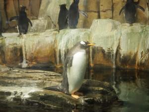 pingouin-biodome-2