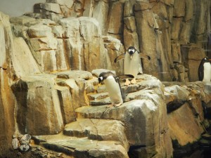 pingouin-biodome-3