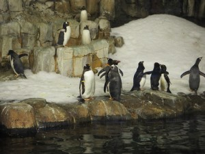 pingouins-biodome