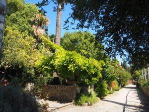arboretum_trsteno_croatie_2