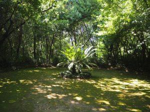 arboretum_trsteno_croatie_5
