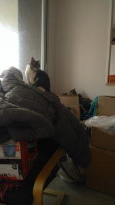chats et cartons déménagement