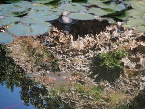 neptune-nympheum-arboretum-trsteno-croatie