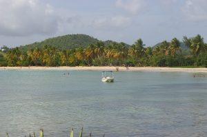 Plage Ste Anne en Martinique avec sable blanc et palmiers