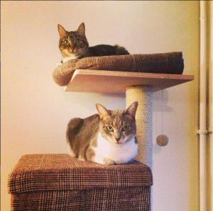 deux chats sur un arbre à chats