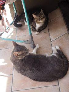 Deux chattes profitent du soleil sur le balcon sous le linge qui sèche