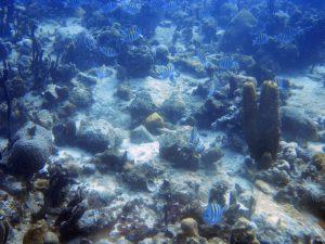 Petits poissons bagnats à la Guadeloupe