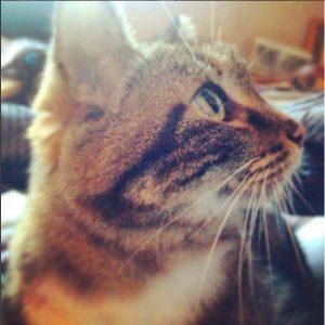 le chat, animal ami de votre sérénité
