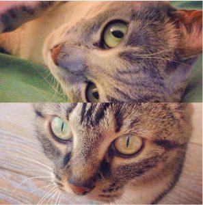 Nos chats adorés