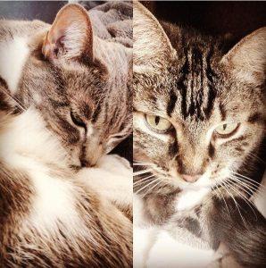 Le repos des chats