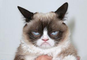 Le grumphy cat